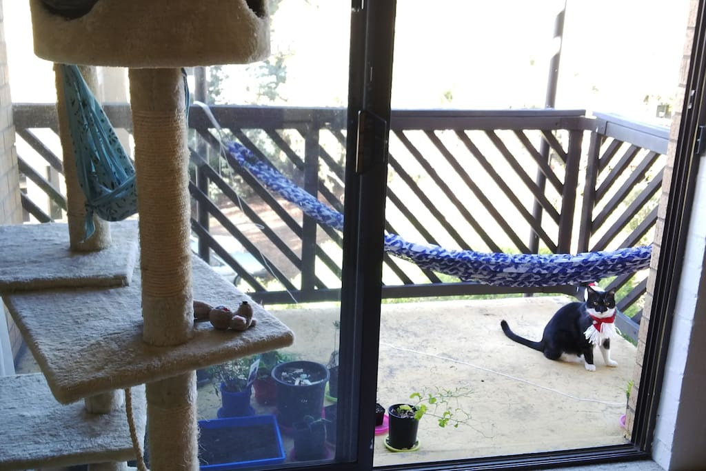 Summer balcony with hammocks (1 cat size and 1 human size) with a Christmas cat