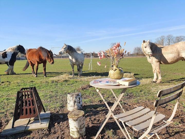 Een oase van rust tussen de paarden