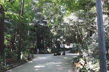 Parque Trianon (150 mts). Trianosn Park (150 meters)