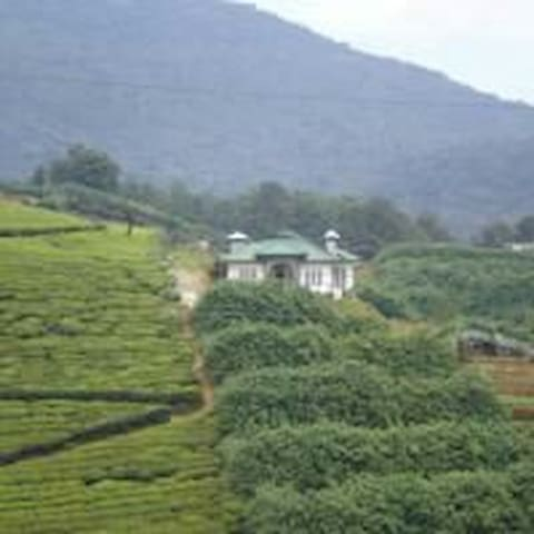 Royal Terrace Bungalow- Misty hill surrounding