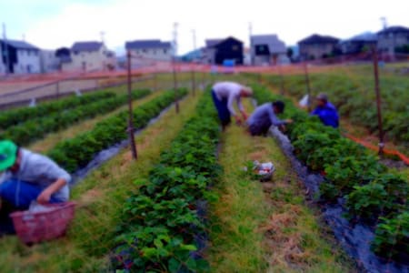 World Heritage & Agricultural Experience. - Himeji-shi