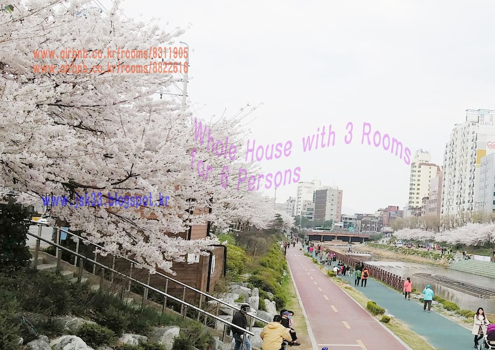 2 Minutes from JS House (Bulgwangcheon in Spring)