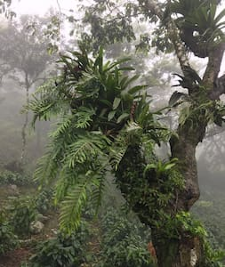 RANCHO SANTA ANA - COFFEE PLANTATION
