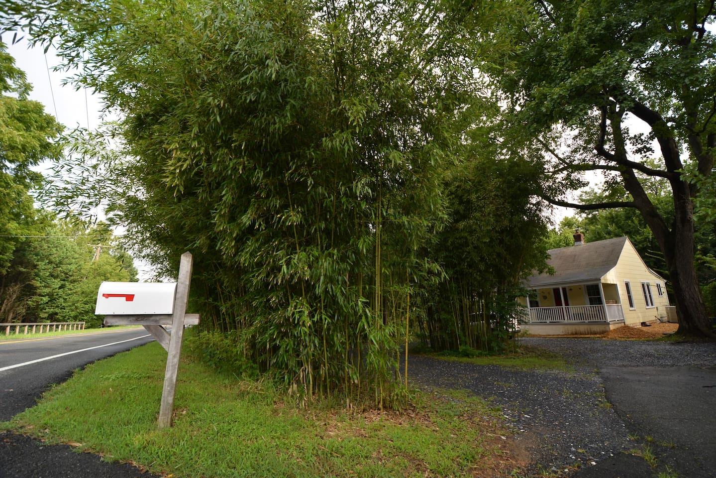 Upon arrival, bamboo thicket greats the guests