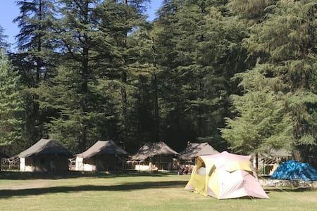Kasol Camps Parvati Valley - Kasol - Zelt