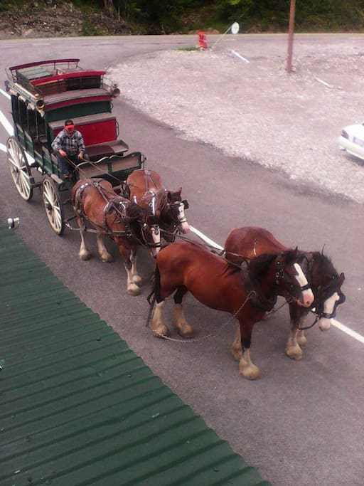 Our stagecoach with our horses