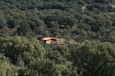 Cabaña del bosque
