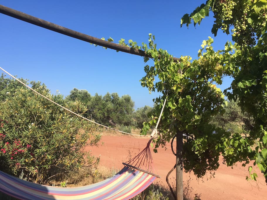 Hammock on the front porch surrounded by and olive grove