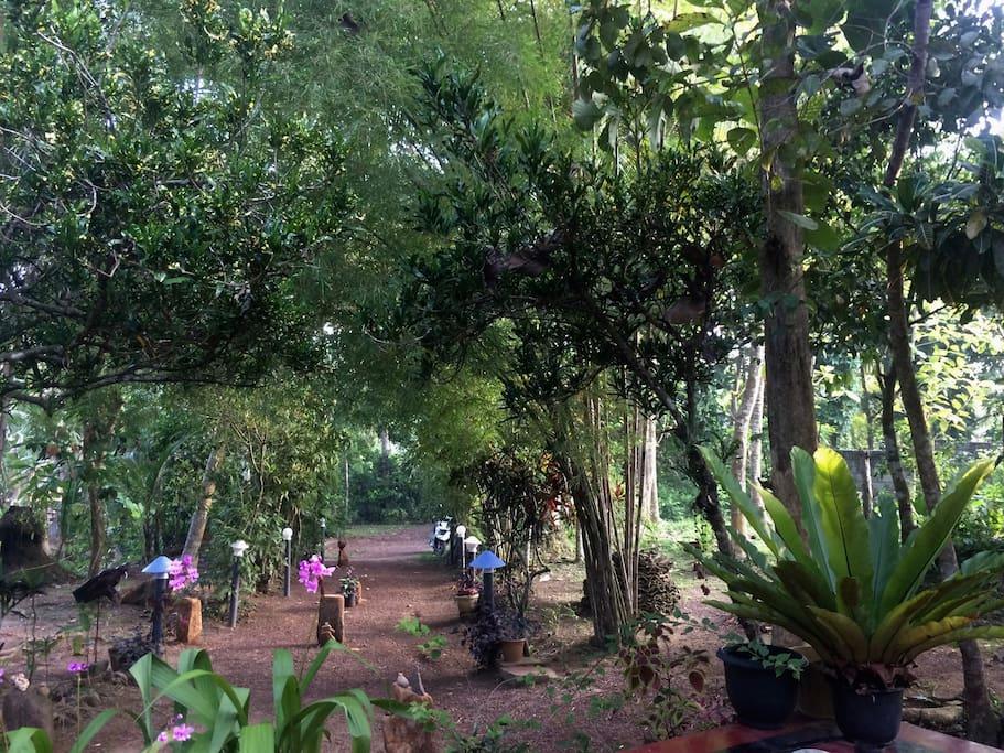 Mimosa Villa garden/driveway