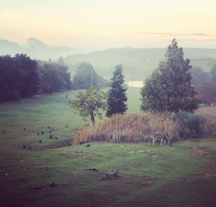 Wildlife retreat on a wine-farm