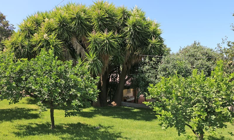 Agricontura with pool - CASA DELLA YUCCA - Capri Leone - House