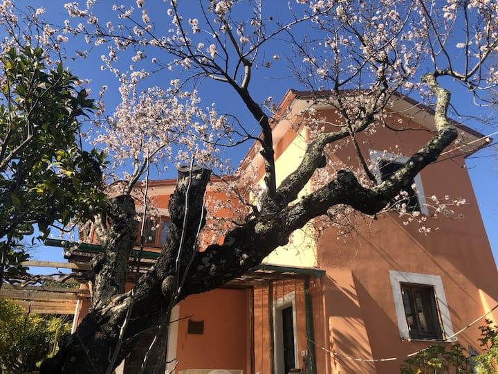 La casa del mandorlo, nella campagna di Roma -7992