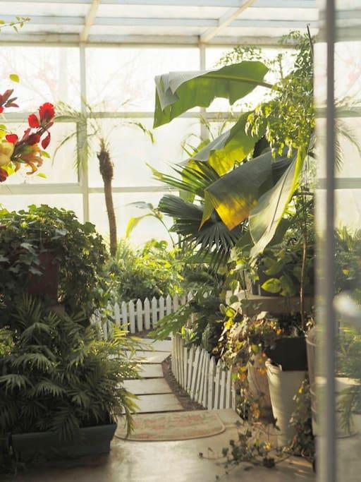 进入若莱客房需经过花园小径,花园花草四季常绿