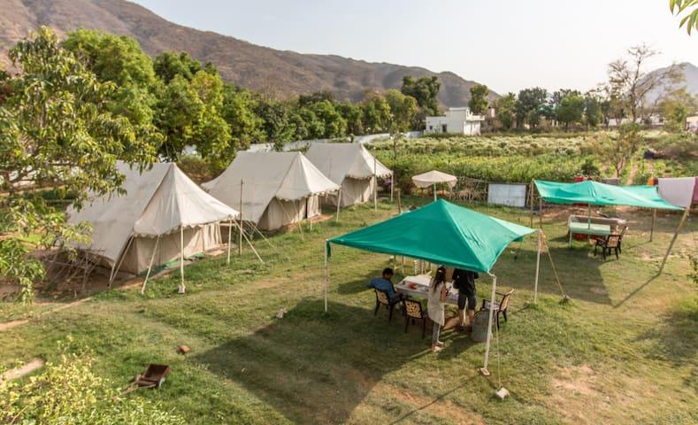 Backpacker Panda Chand Palace - Swiss tents - Pushkar