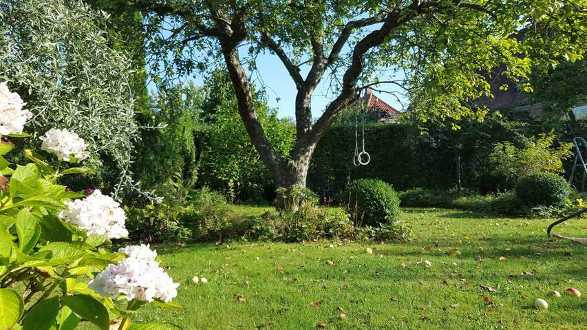 Small sunny garden