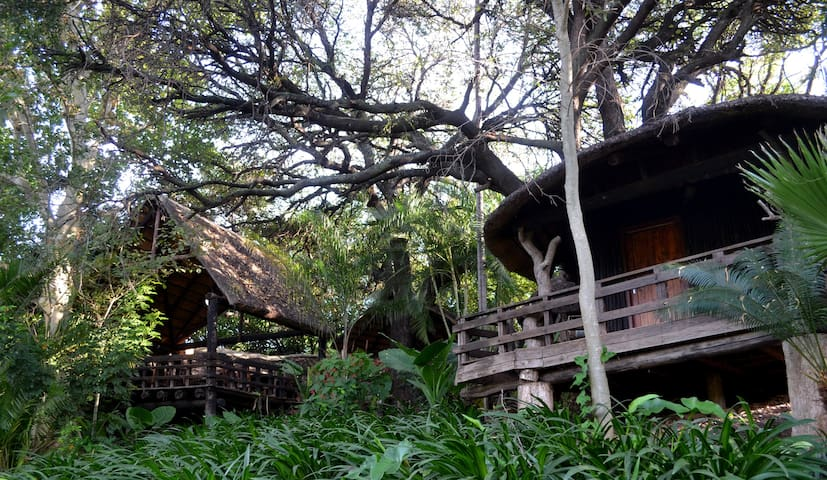 Bush Baby Lodge Alicedale - Tshipise