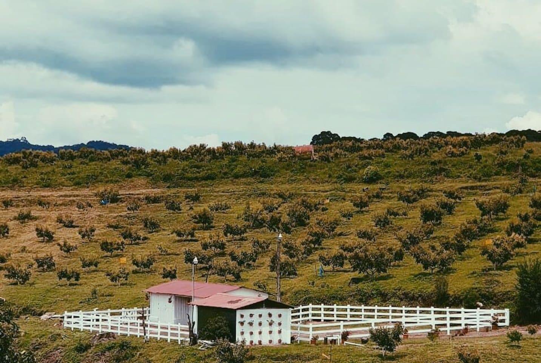 We provide guided tours through the coffee and avocado plantations (Proveemos recorridos guiados a través de las plantaciones de café y aguacate)