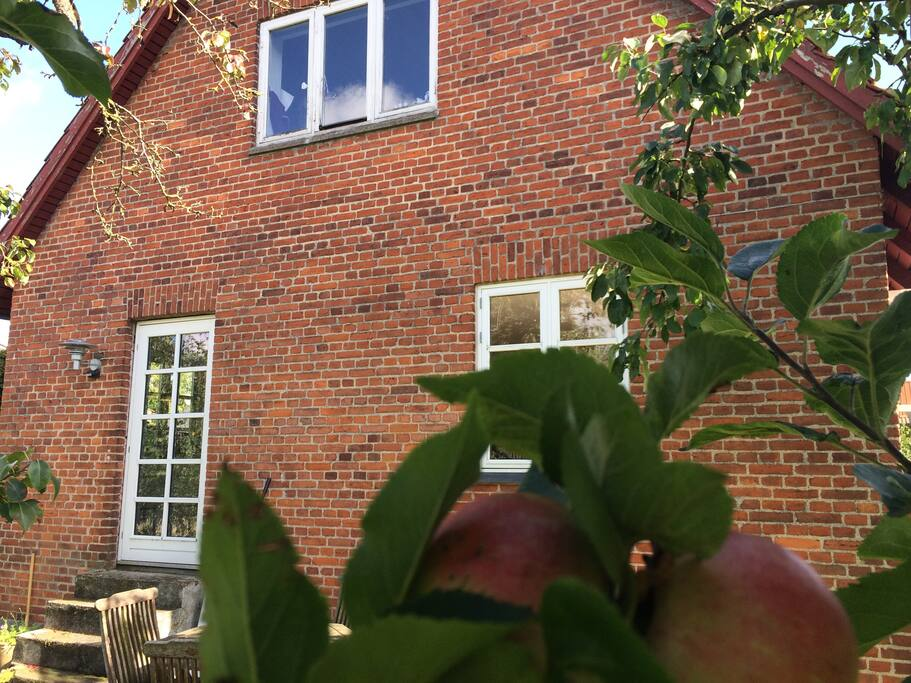 Late summer means apple time in the garden