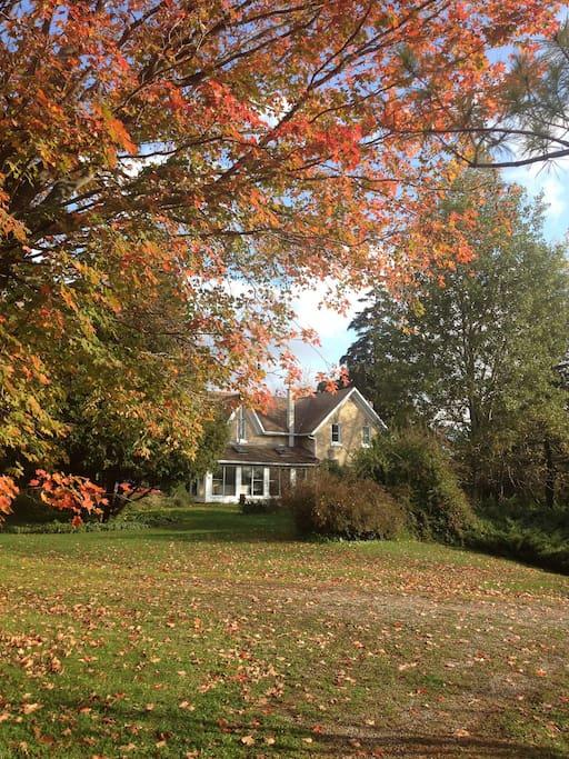 Autumn in Auburn