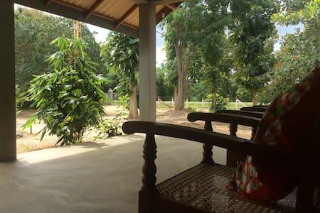 Coconut Garden 23