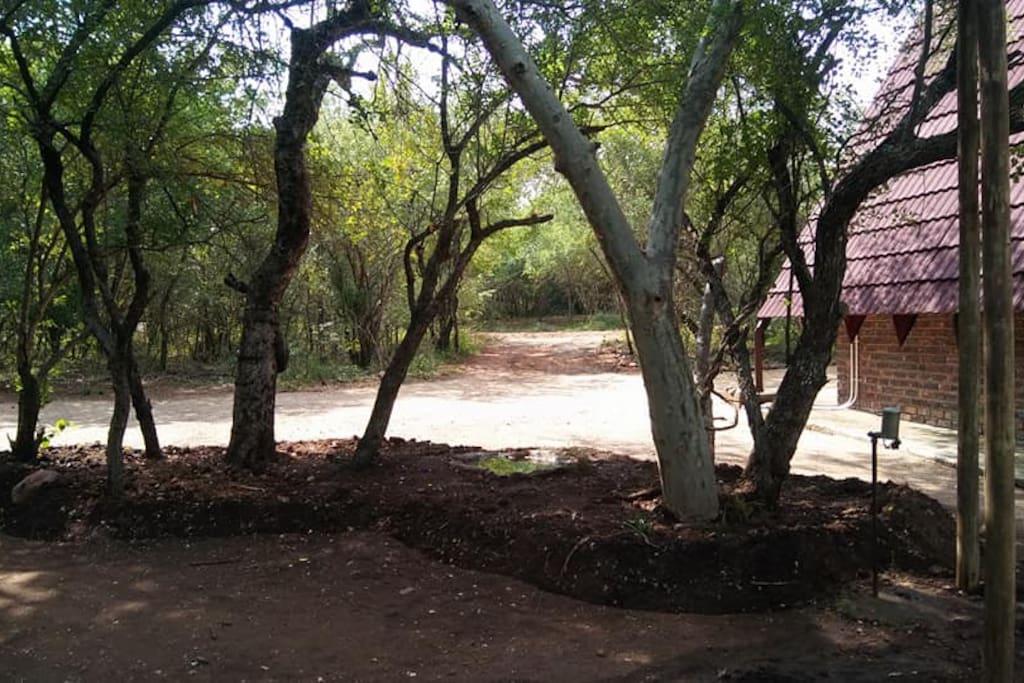 Common garden area