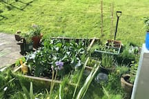 All the back garden veggies!