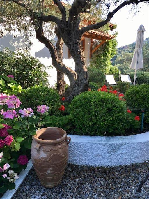 Garden and surroundings