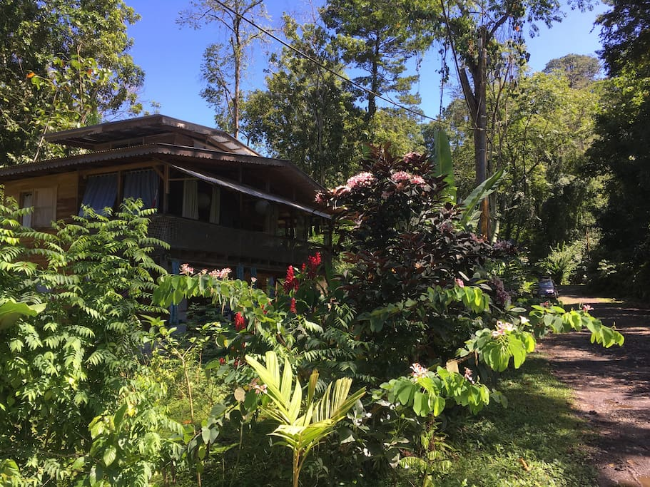 Casa Verano, surrounded by the tropical garden and rainforest