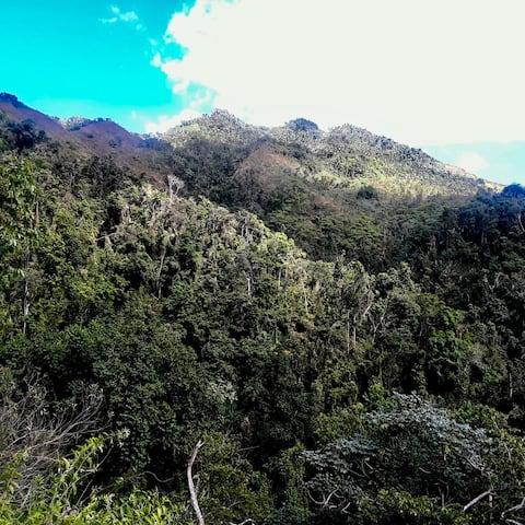 El Bohio: Rainforest Retreat
