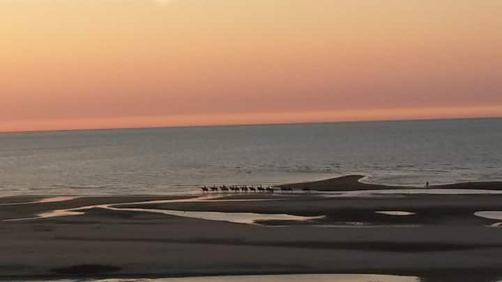 Beachsuite Koksijde breathtaking view on North Sea