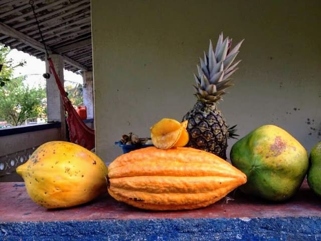 Fresh fruits here: pineapple, papaya, cacao and starfruit, reaped from the terrains of Fazenda taboquinhas.