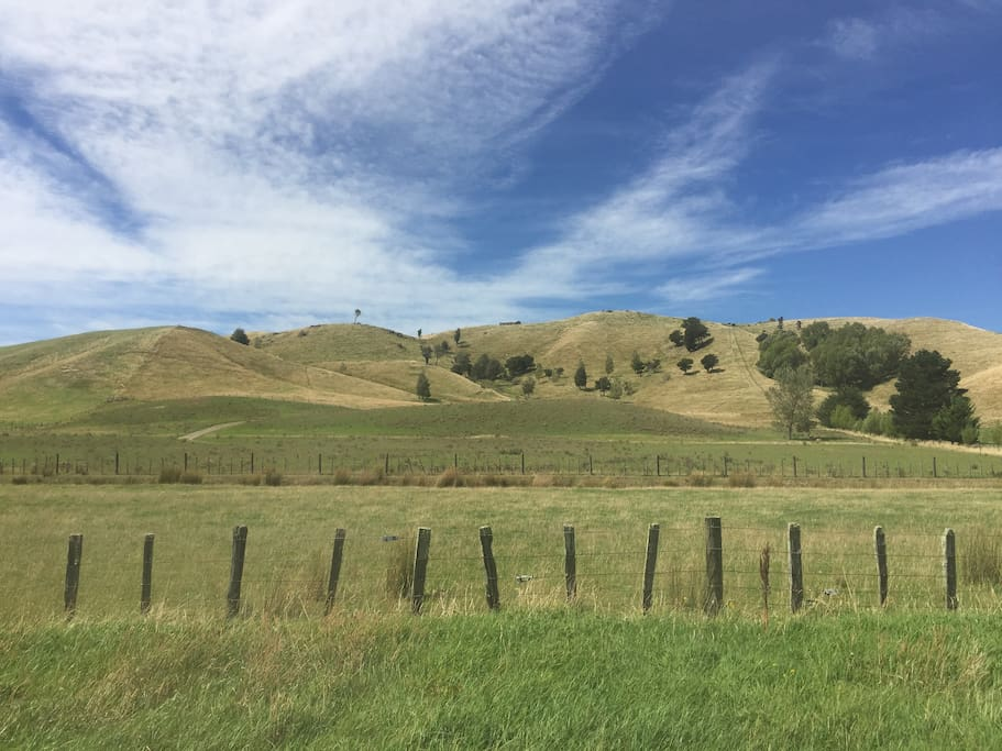 Climb the hills and spot the wild Fallow deer and views over Masterton.