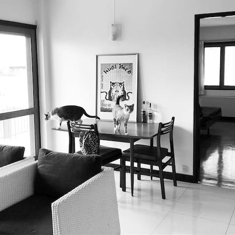 Nice 1 Bedroom Apartment for Cat Lovers in Bangkok
