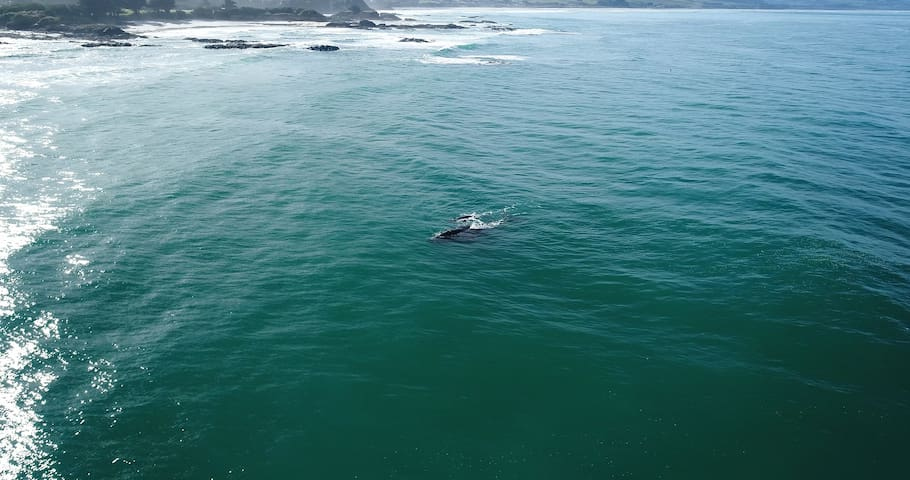 Whale and baby just off shore from our home!!