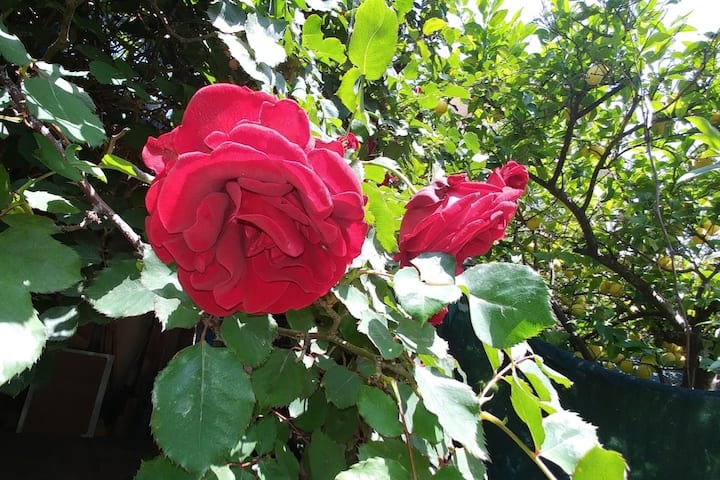 Red Rose Home,Old city Tzfat, Lecha Lecha Suites