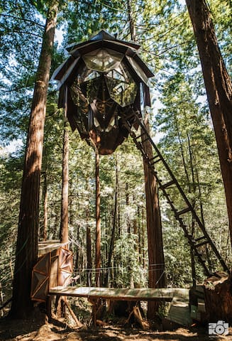A giant Pinecone, suspended in a fairy ring of Redwood trees.