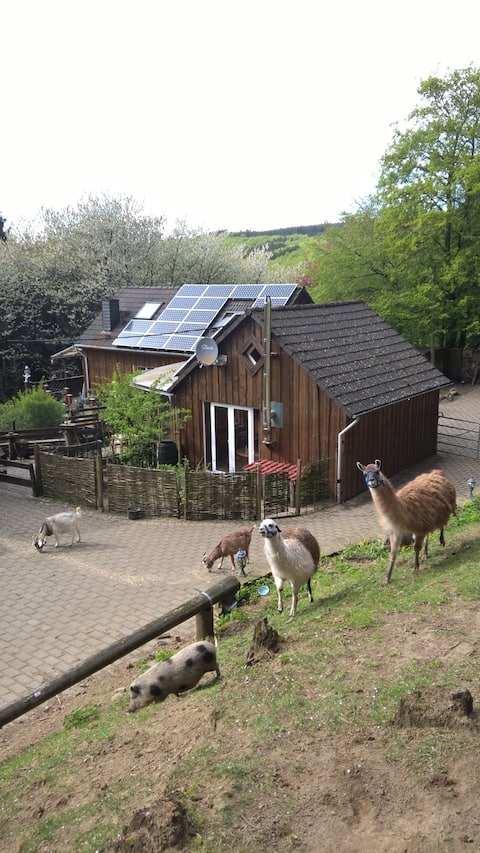 Funny-Farm