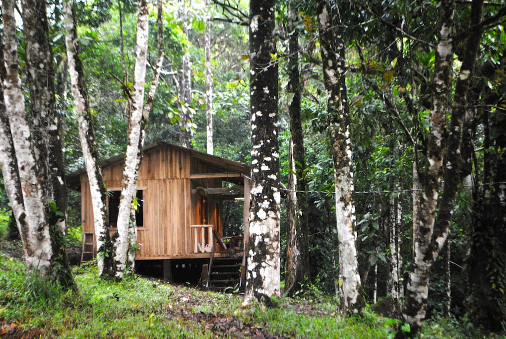 Cabin in the rainforest