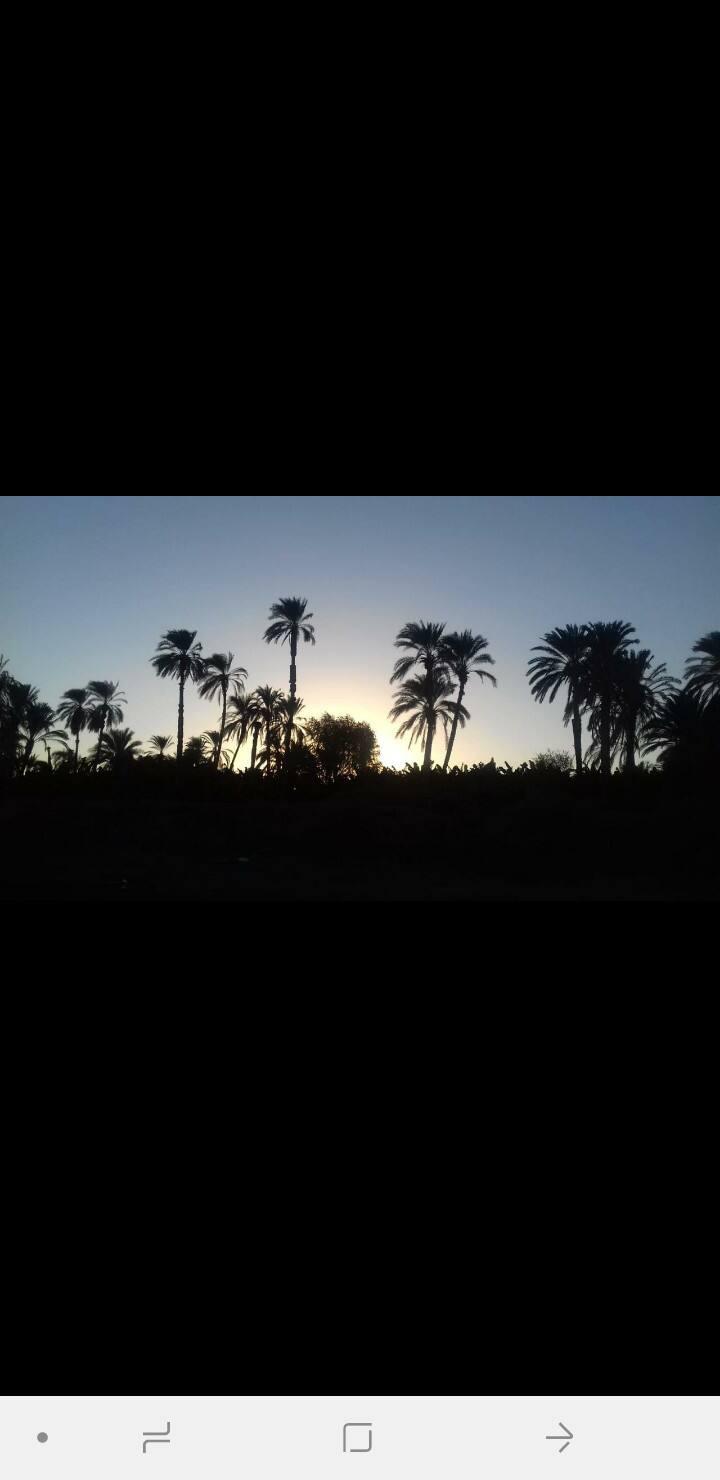 Luxor west bank gazert Albert