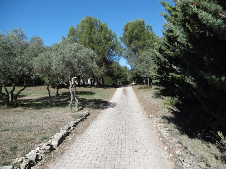 Maison dans la garrigue, au milieu des oliviers