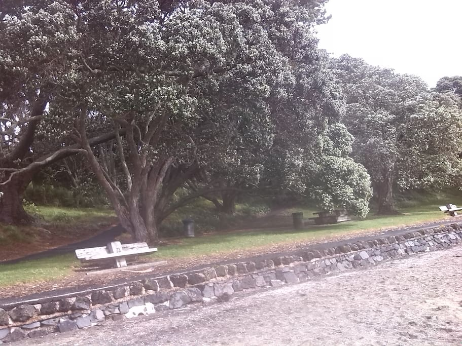 Pohutukawa lined Point Chevalier Beach with picnic tables and seating