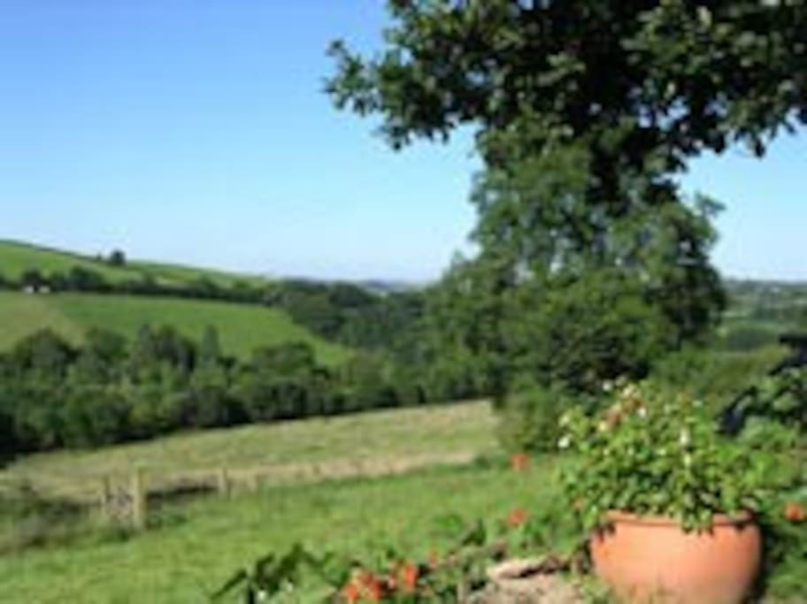 Summer view from Wigham