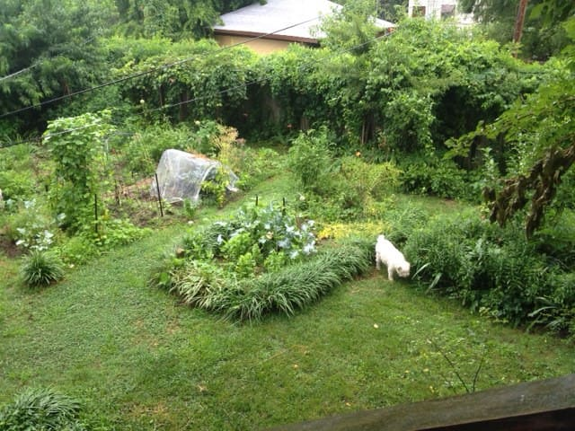 a view of the gardens from the tree house
