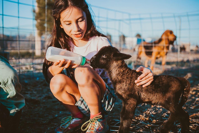 Spend time seeing, feeding, milking and cuddling farm animals.