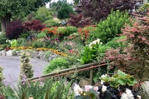 Early July view of garden.