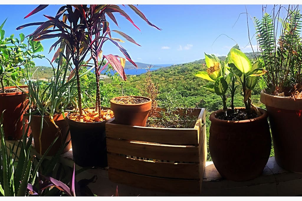 Hans Lolick in the distance! Slightly separated from St. Thomas be the Caribbean Sea and our beautiful jungle!!