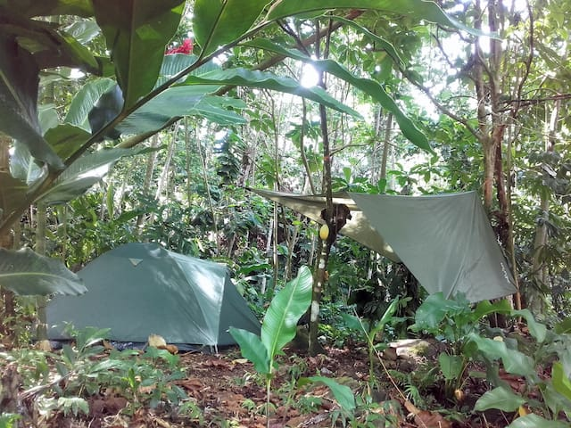 Natural Campsite at Our Kalinago Home