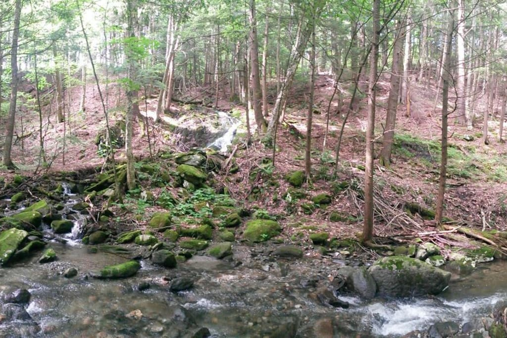 Creek and forest below home