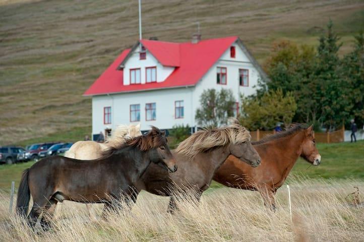 Guesthouse Geitaskarð