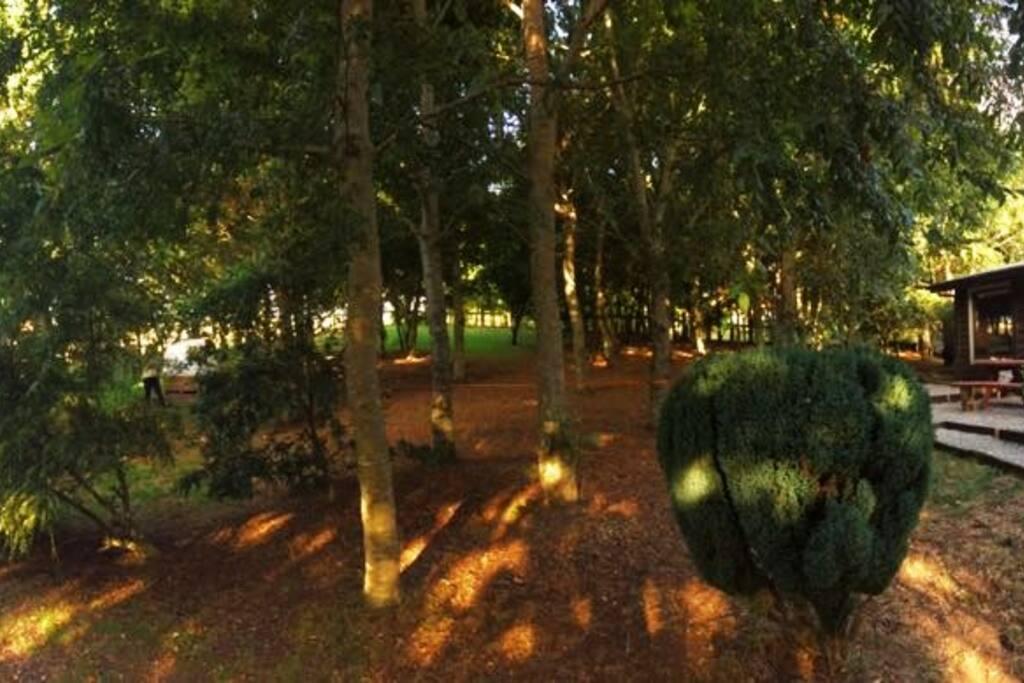 Amplio patio para disfrutar la tarde